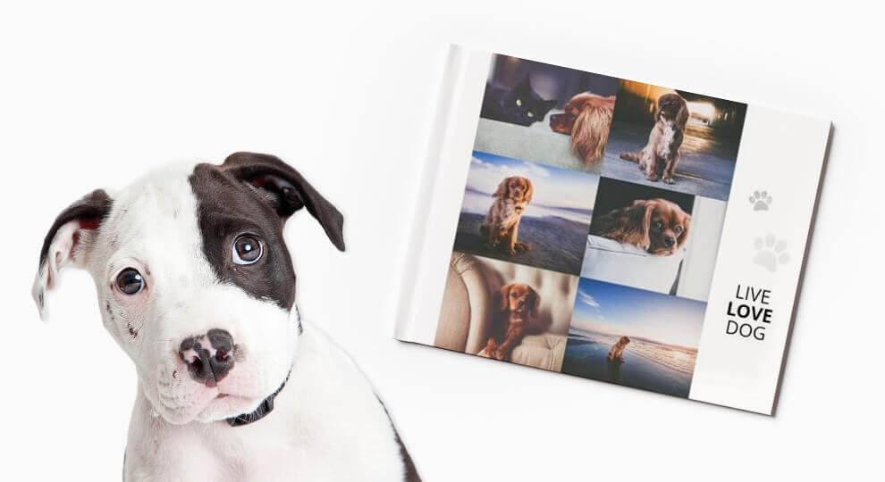 Album ze zdjęciami psów